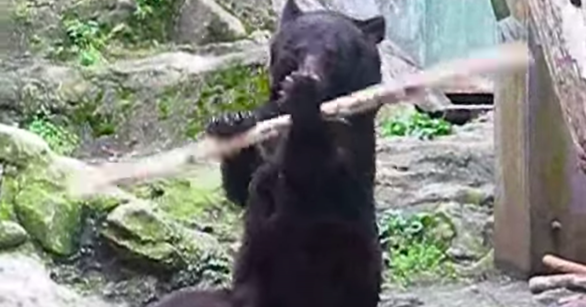 Real Life 'Kung Fu Bear' From Hiroshima Becomes Social Media Hit.