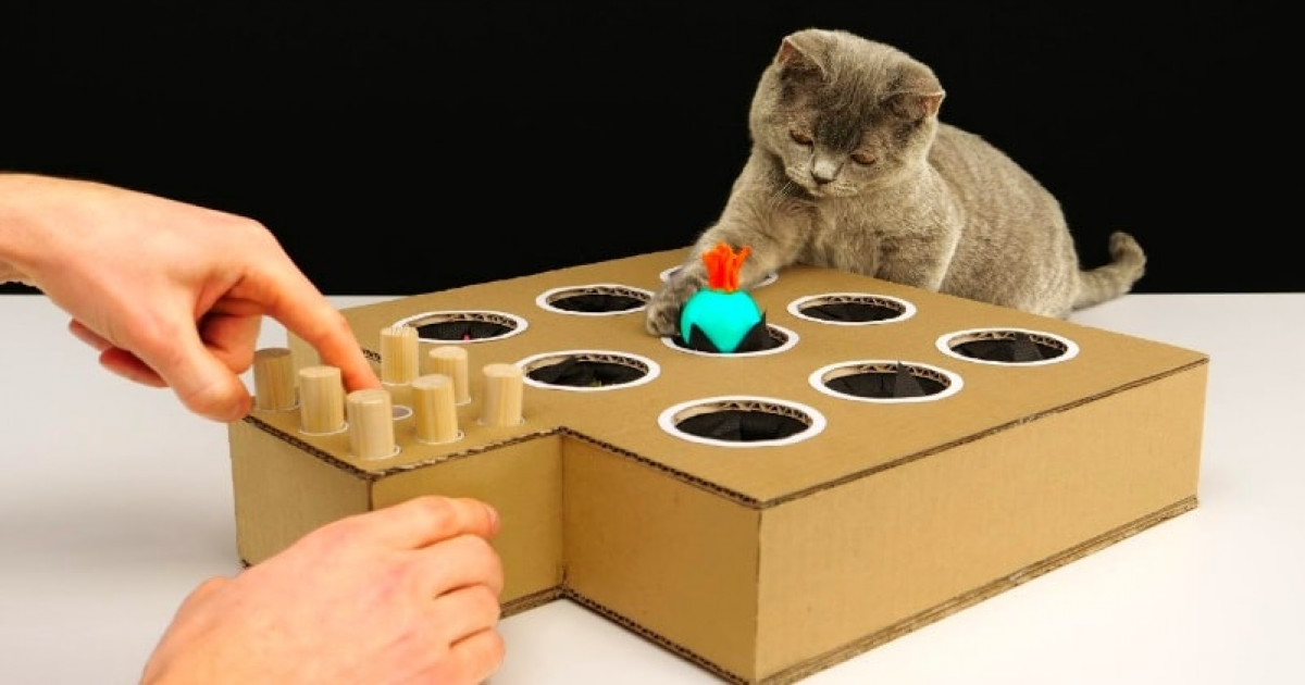 Cat-Loving Human Build A Homemade Whack-a-Mole Game To Entertain Her Playful Felines.