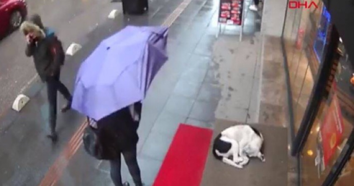 Lovely Woman Leaves Scarf As Blanket For Dog Sleeping In The Cold Turkey.