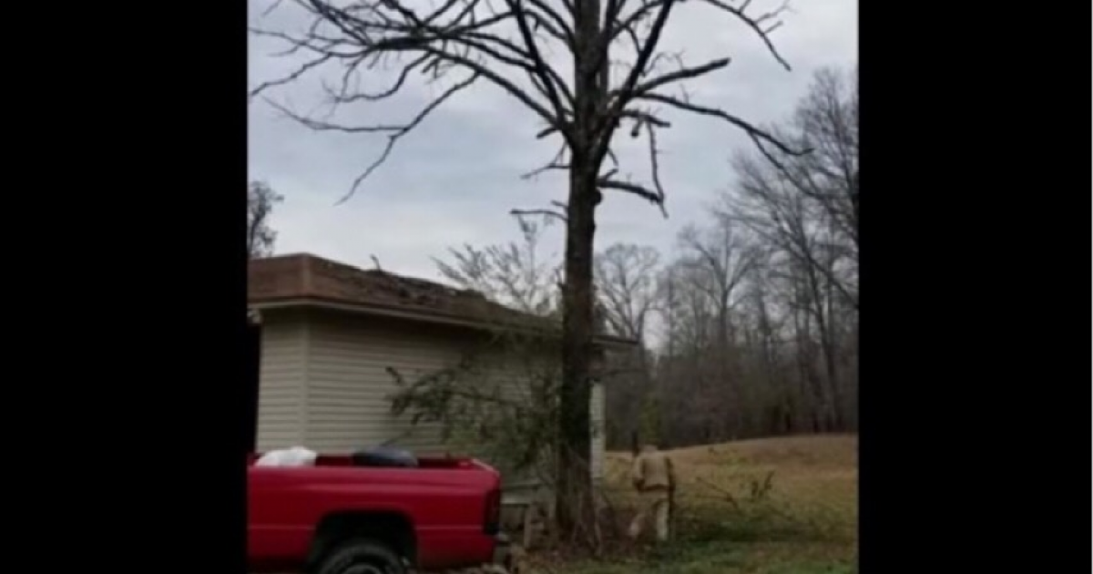Dude Ignores His Mother's Advice, Chops Down Dead Tree And Get Instant Karma.
